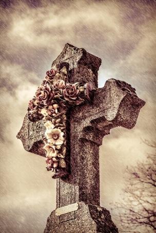 cross roses s