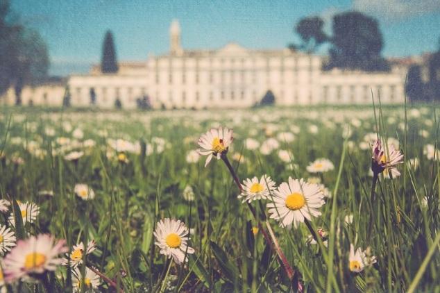 daisies s
