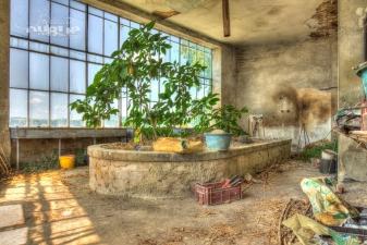 L'orangerie abandonné (2)