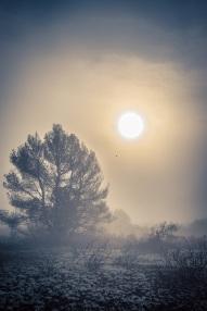 mist s