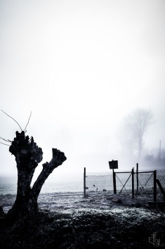 misty morning s