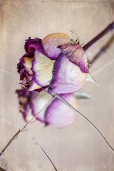 rose on mirror s