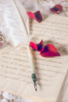 rose petals s