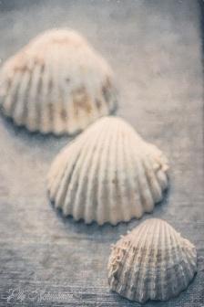 shells s