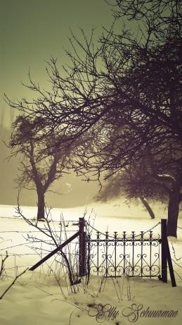 snow gate s