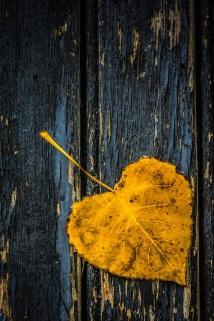 autumn leaves (1) s