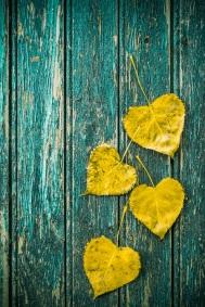 autumn leaves (3)s