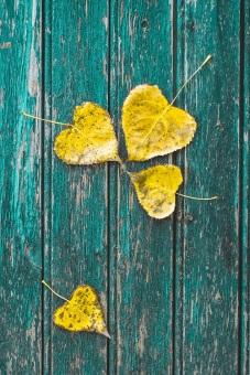 autumn leaves 5s