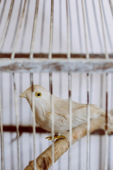 bird in a cage s (4)