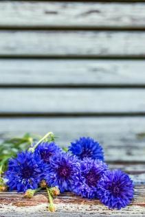 blue-flowers-s-2