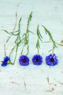 blue-flowers-s-4