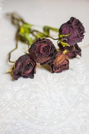 dead roses s (2)