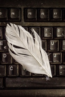 feather on keyboard s