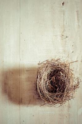 nest s