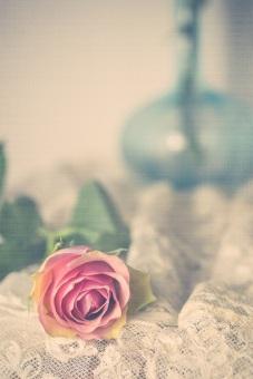 pink rose s