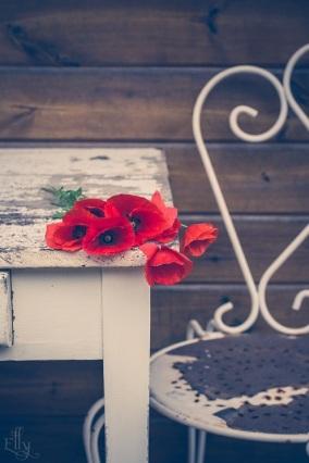 poppies s