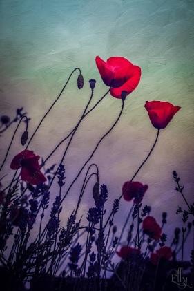 poppy s