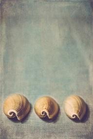 three shells s