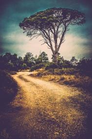 tree s