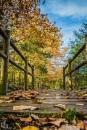 l'automne (4)s