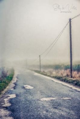 autumn-mist-s