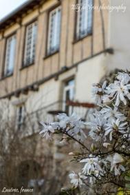 Lautrec, village of garlic in france, village de l'ail lautrec